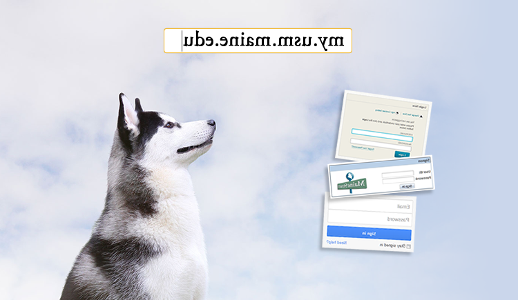 image of husky with my.usm.maine.edu address overlay